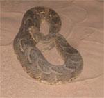 sandali_snake1